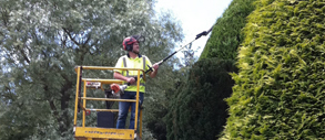 tree services northampton