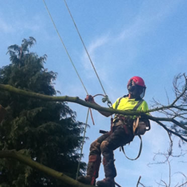 tree removal kettering